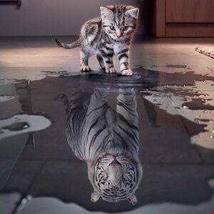 charisme et leadership